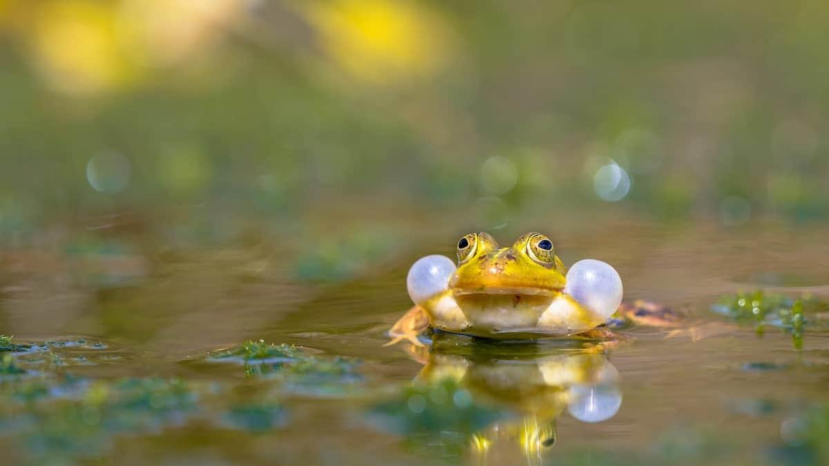 Frog Sounds-min