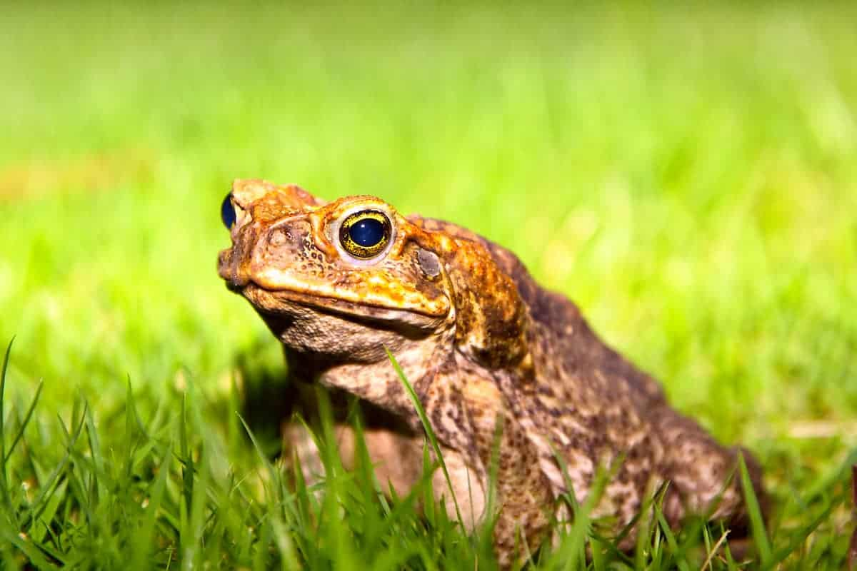 Relocate Move Toads