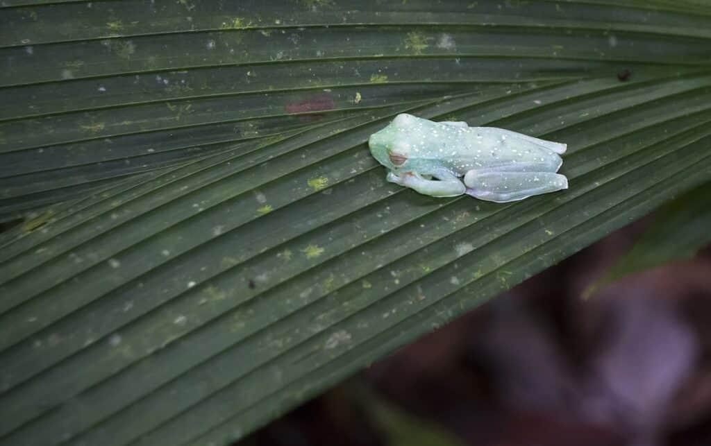 Do Frogs Sleep-min