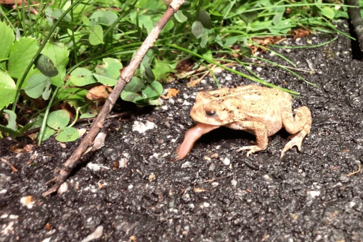 What Frogs Eat Dead Bugs-min